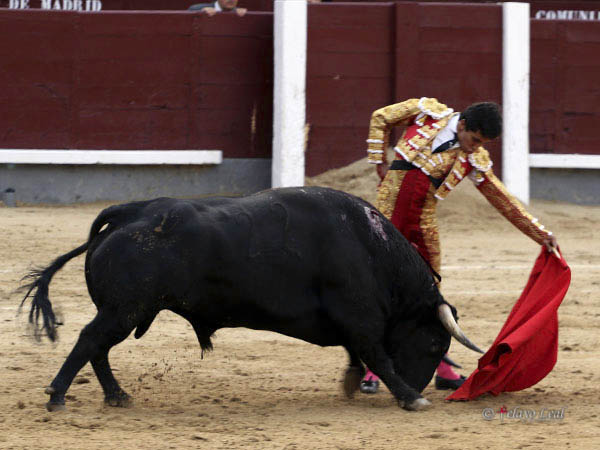 Solvente actuación de Leo Valadez en Madrid