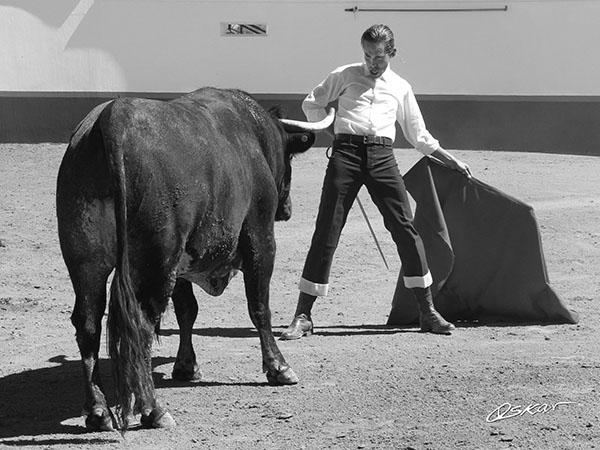 Silveti ensaya con toros para Guadalajara