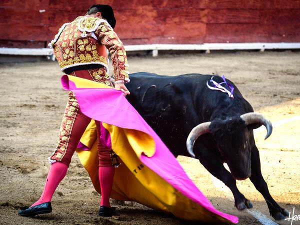 Daniel Luque cae herido en Acho