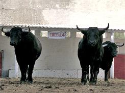 Los toros de San Isidro para La México